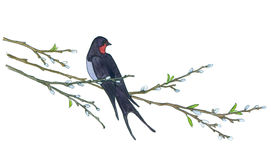 Swallow on willow tree. Hand drawn illustrations stock illustration