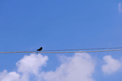 Swallow on wire Stock Photo