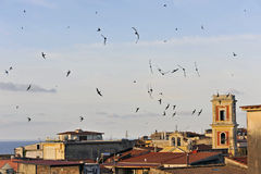 Swallows. Flock of swallows skimming over sea-country rooftops at dusk Royalty Free Stock Image