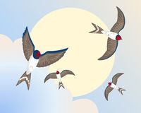 Swallows Immagine Stock