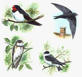 Swallows Royalty Free Stock Images