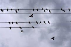 swallows Immagine Stock Libera da Diritti