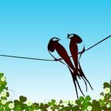 Swallows background Stock Photo