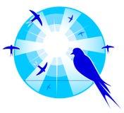 Swallows birds silhouetted against the sun`s rays Stock Photos