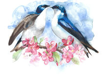Swallows on the blooming branch watercolor painting illustration  greeting card Stock Photo