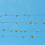 swallows on blue sky background Stock Images