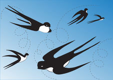 Swallows in the blue sky Stock Photography