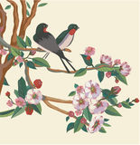 Swallows on a branch of sakura. Royalty Free Stock Photography