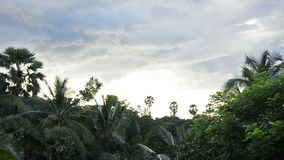 Swallows flowing in the afternoon in bali/ indonesia. And hunting for insects stock video footage