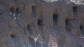 Swallows fly into the nests. Slow Motion. Swallows fly into the nests on a cliff by the river. Slow Motion stock footage
