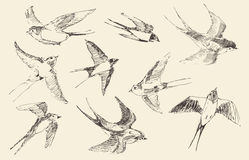 Swallows Flying Bird Vector, Hand Drawn, Sketch Stock Photography