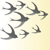 Swallows flying in the sky Stock Photo