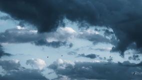 Swallows Flying In A Stormy Sky stock footage