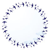 Swallows, frame Royalty Free Stock Image