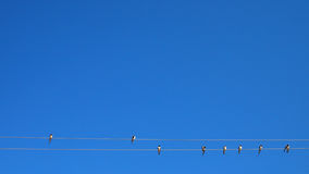 Swallows gethering Royalty Free Stock Images