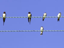 Swallows and house martins. On a wire in summer under a blue sky royalty free stock photos