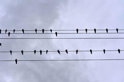 Swallows. Many swallows on wire, over cloudy sky background Stock Photos