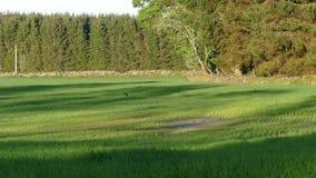 Swallows at meadow - 4K Royalty Free Stock Photo