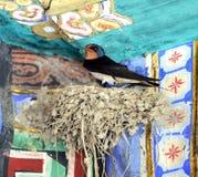 Swallows Nest Stock Photo