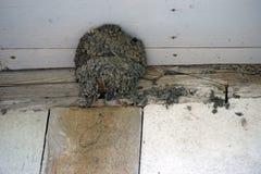 Swallows Nest Royalty Free Stock Photos