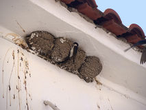 Swallows nests at Skala Kalloni Lesvos Greece Royalty Free Stock Photography