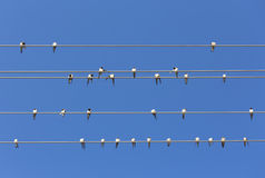 Swallows. On the parallel wires and clear blue sky at summer stock photos
