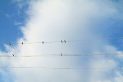 Swallows Stock Photos