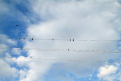 Swallows Royalty Free Stock Photos
