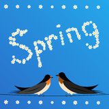 Swallows perched on a wire with sign spring Stock Photo