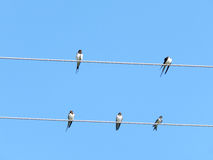 Swallows sitting on a wire Stock Photos