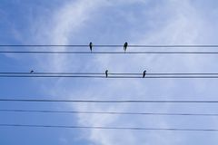Swallows sitting on wires over summer blue sky royalty free stock images