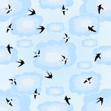 Swallows in the sky Stock Images