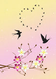 Swallows in spring Royalty Free Stock Images