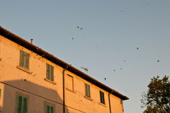 Swallows who go to sleep in the roofs at sunset, Bolgheri Tuscany Royalty Free Stock Photo