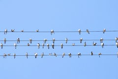 Swallows on wire. Swallows rest on wire, blue sky Royalty Free Stock Images
