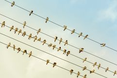 Swallows on a wire - power line - in the evening sun. Like music nodes stock image