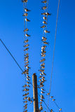 Swallows on a wire. Swallows swarm sitting on a wire with clear blue sky in the background. Multitude of birds Stock Photo