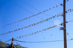 Swallows on a wire. Swallows swarm sitting on a wire with clear blue sky in the background. Multitude of birds Royalty Free Stock Photos