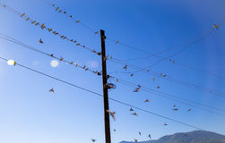 Swallows on a wire. Swallows swarm sitting on a wire with clear blue sky in the background. Multitude of birds Stock Image