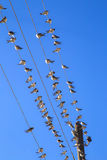 Swallows on a wire. Swallows swarm sitting on a wire with clear blue sky in the background. Multitude of birds Stock Photos