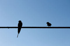 Swallows on wire Stock Photo