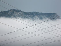 Swallows on the wires. The mountain in the clouds Royalty Free Stock Image