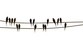 Swallows on wires Stock Photo