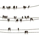 Swallows on wires Stock Images