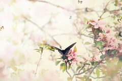 Swallowtail在春天 库存照片