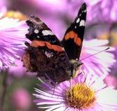 Swallowtail Stock Photography