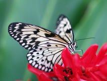 Swallowtail Fotos de archivo libres de regalías