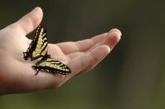 Swallowtail Royalty Free Stock Photos
