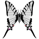 Swallowtail butterfly. Vector illustration of swallowtail butterfly Stock Photo