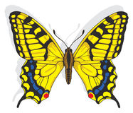 Swallowtail butterfly. Painted Swallowtail butterfly. Vector EPS8 Royalty Free Stock Image